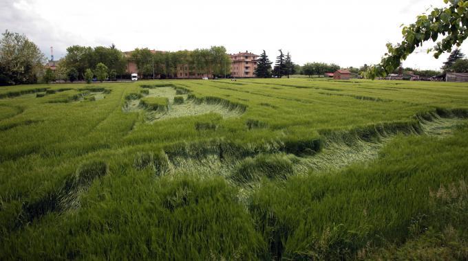 Cerchi nel grano: strana apparizione in Lombardia