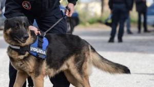 700_dettaglio2_Cani-poliziotto2