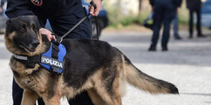 I fantastici cani da cadavere della Polizia di Stato