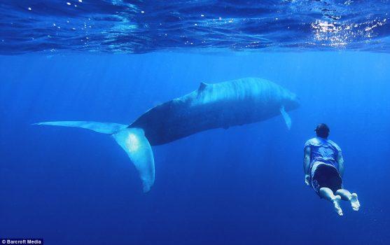 No, Blue Whale non esiste. E smettiamo di parlarne.